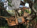 wooden tree house 1